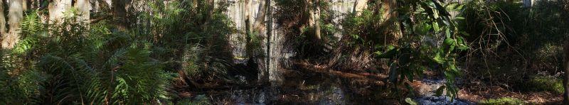 wetlands 1