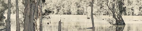 wetlands 3 - FX pencil paint