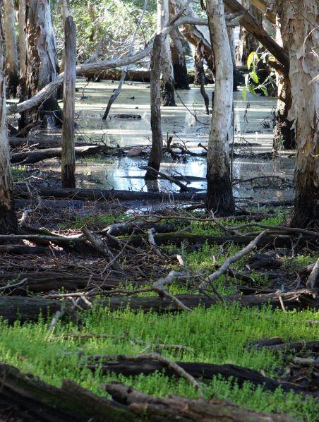 wetlands 6