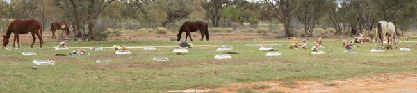 Cemetery - horse panorama