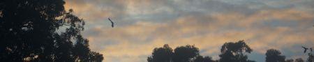 morning - bird