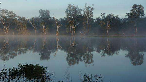 Morning fog on the Balonne