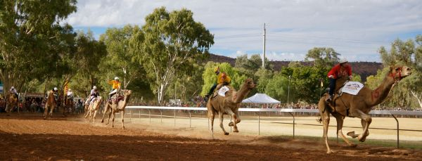 Camel Cup Day 1