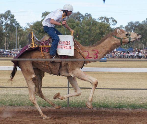Camel Cup Day 2