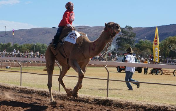Camel Cup Day 4