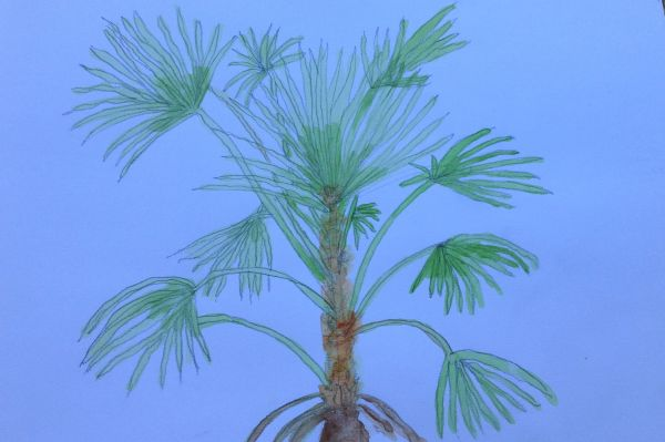 Echidna Gorge - palm