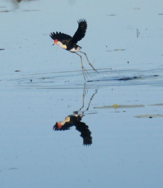 Lake Argyle morning birds 2