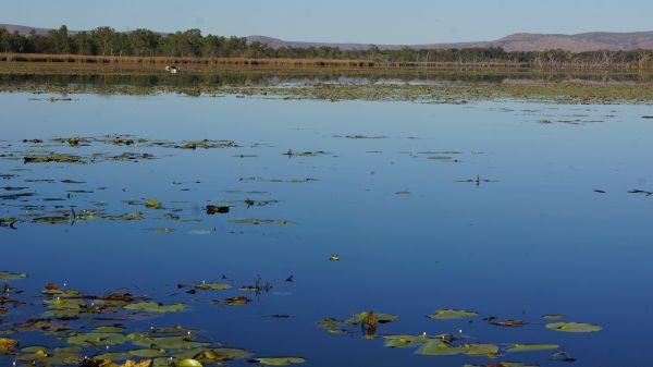 Morning on Lake Argyle