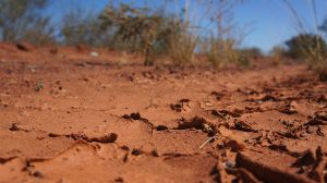 mud crackle art on the Tanami Track