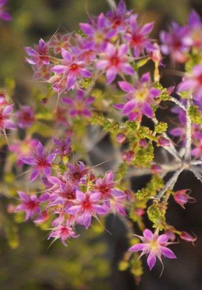 pink flowers - Wolfe Creek
