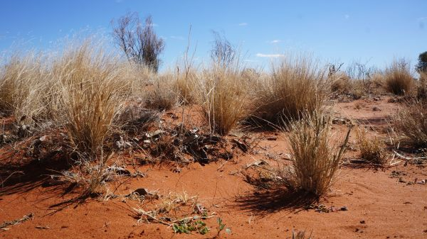 red sand - Innamincka to Birdsville