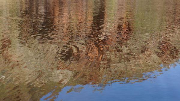 reflections - Caroline Pools