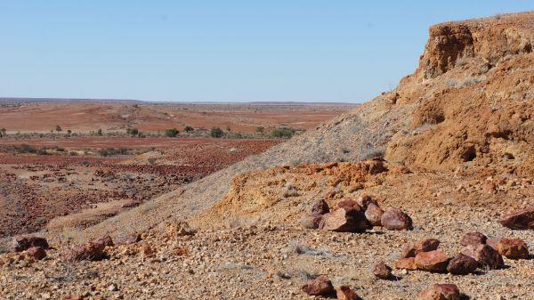 Wadi tree plains 2