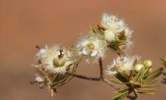 1 August wildflower