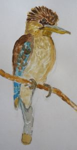blue winged kookaburra water colour and pencil