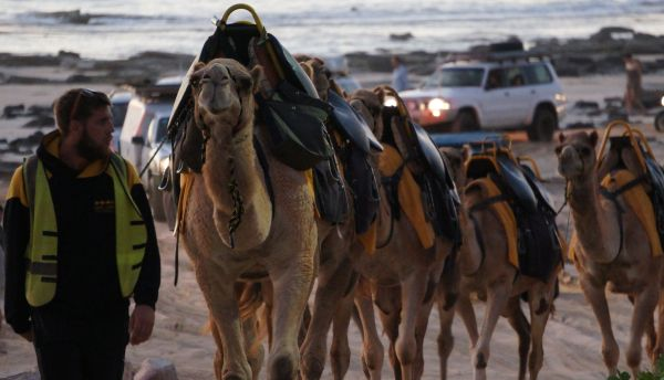 Camel train 1 - Cable Beach