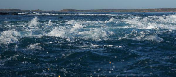 giant tides 1