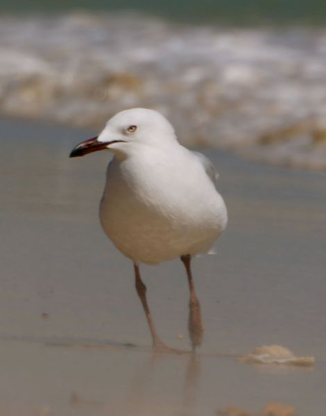 sand blown seagull