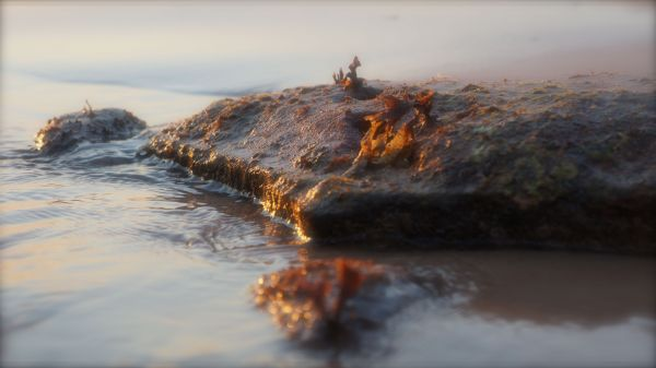 sunset seaweed 3