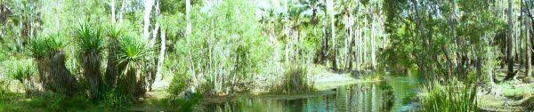 Bitter Springs - panorama