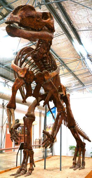 Muttaburrasaurus - Dinosaur Centre Hughenden