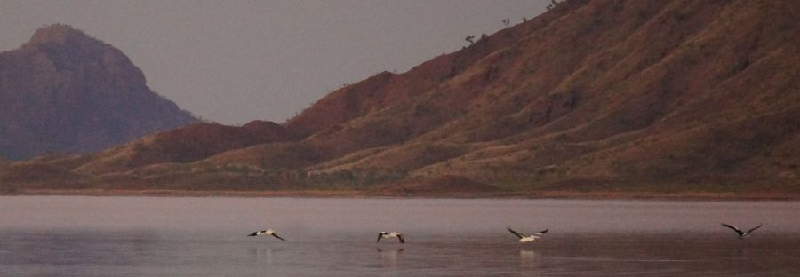 Pelican landing - Lake Argyle sunset
