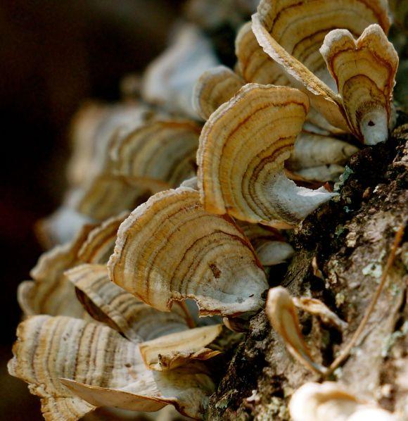 Fungi - Lake Lanier 2