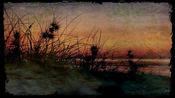 80 Mile Beach grasses at sunset