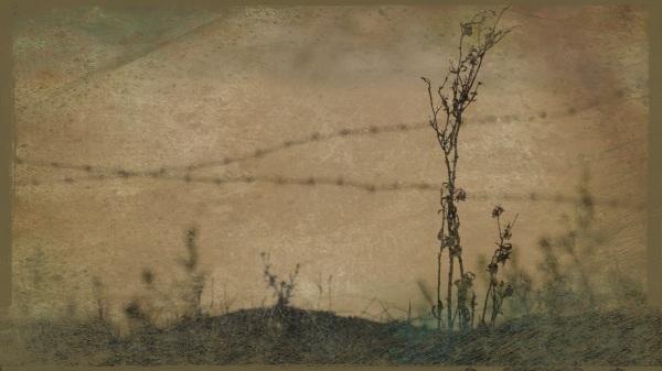 barbed wire - Birdsville - Grungetastic - Worn 16