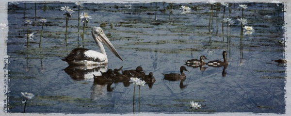 birds in lagoon - Wyndham - Grungetastic - Distressed 07