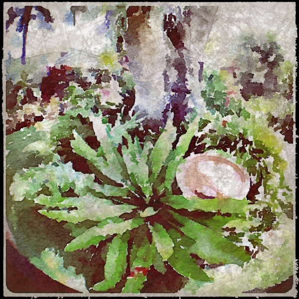 Fern garden - fisheye - Waterlogue - Grungetastic effects