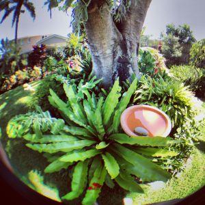 Fern garden - fisheye
