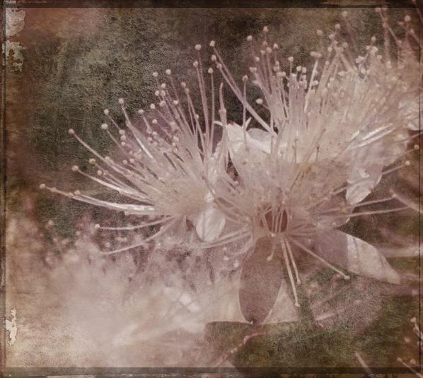 floral -Worn