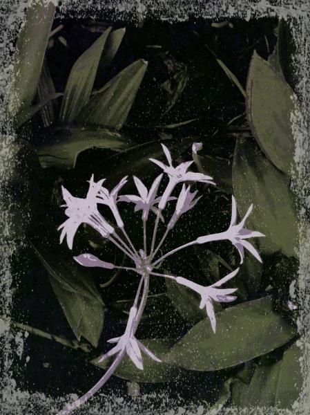 garlic flower - pop grunge 20