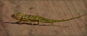 Madagascar 3 - Grunge 02