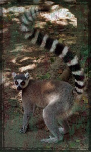 Madagascar 7 - Grunge 02