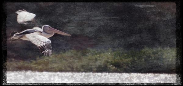 Pelican - Grungetastic - Worn 3