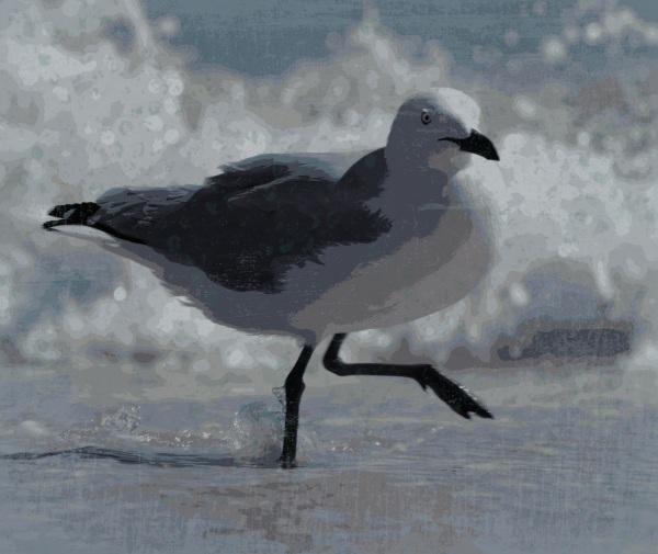 seagull - Pop Grunge 14
