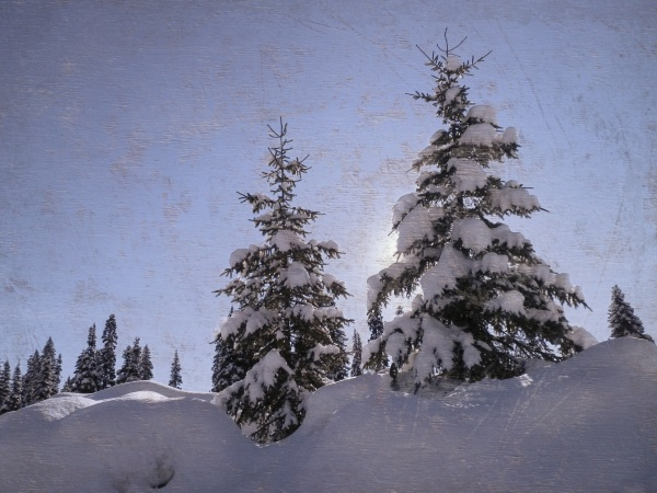 snow trees - Canada - Worn 02