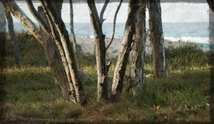 Stradbroke - camp site 2 - Grunge 01