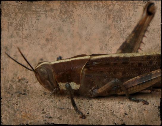 expired grasshopper 3