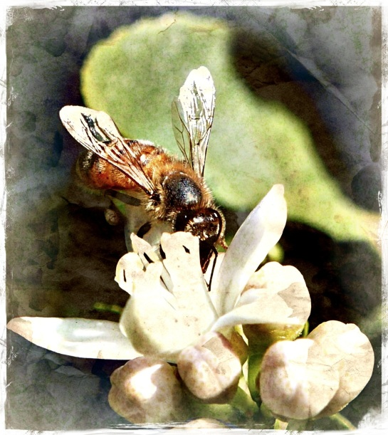 Bee in lime flower - Gritty 13 Grungetastic