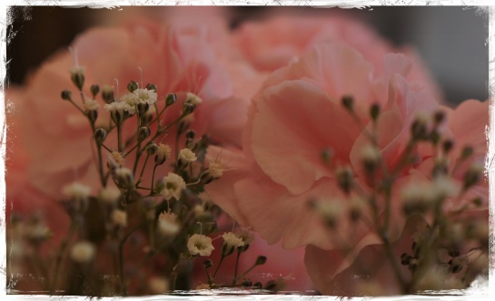 carnation and baby's breath