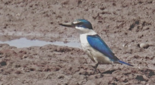 kingfisher - 13 Sep 2014