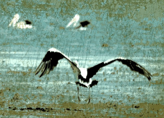 pelicans in flight Pop Grunge 7 FX Warm +