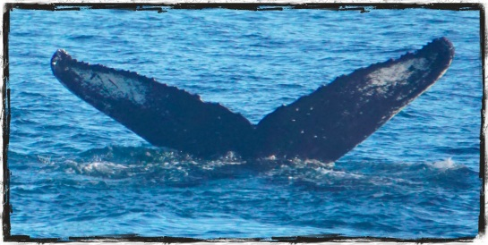 Whale tails 1