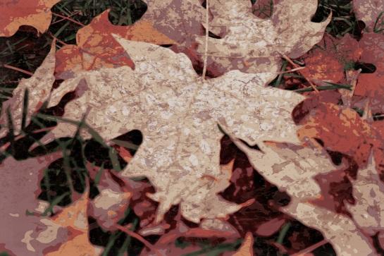 Autumn 1 - Pop Grunge 02