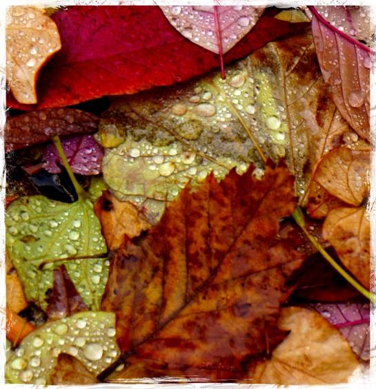 Autumn leaves - Madison WI