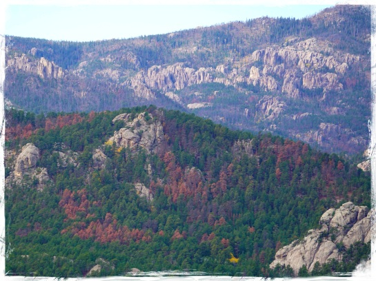 Black Hills National Forest 1
