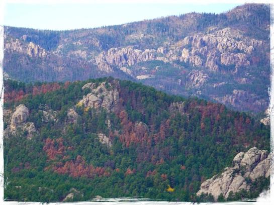 Black Hills National Forest 1